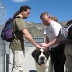 Saint Bernard chiens à la colline